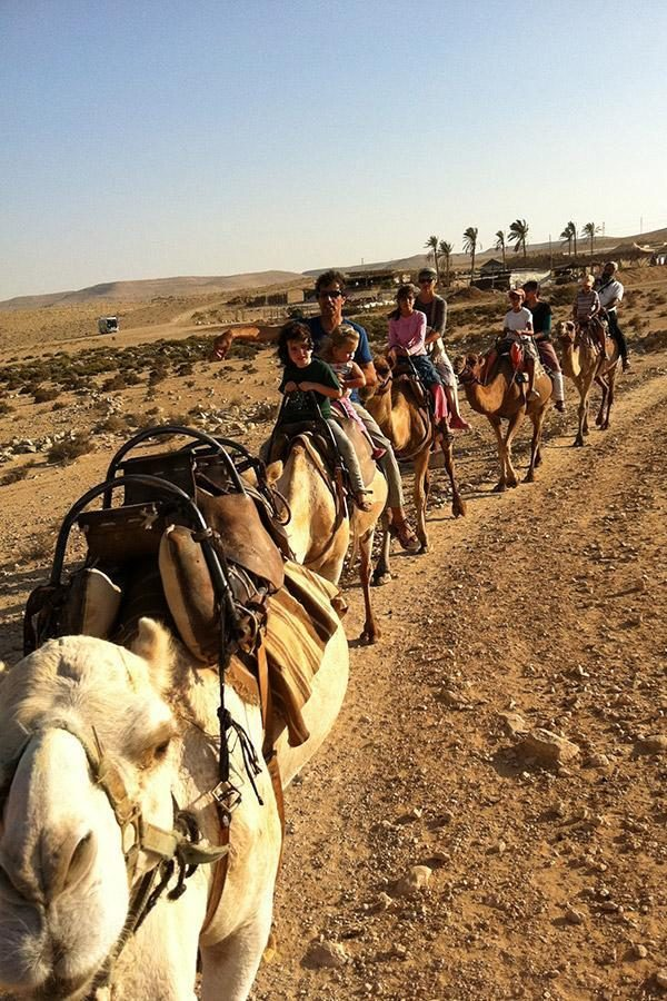 Camel ride in the Negev - Krivine Guesthouse